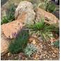 Камни для ландшафтного дизайна (8)